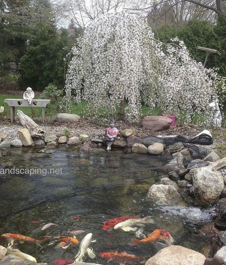 Keep your pond looking good and your fish healthy with a regular pond clean out in the spring and a little routine maintenance through-out the year.