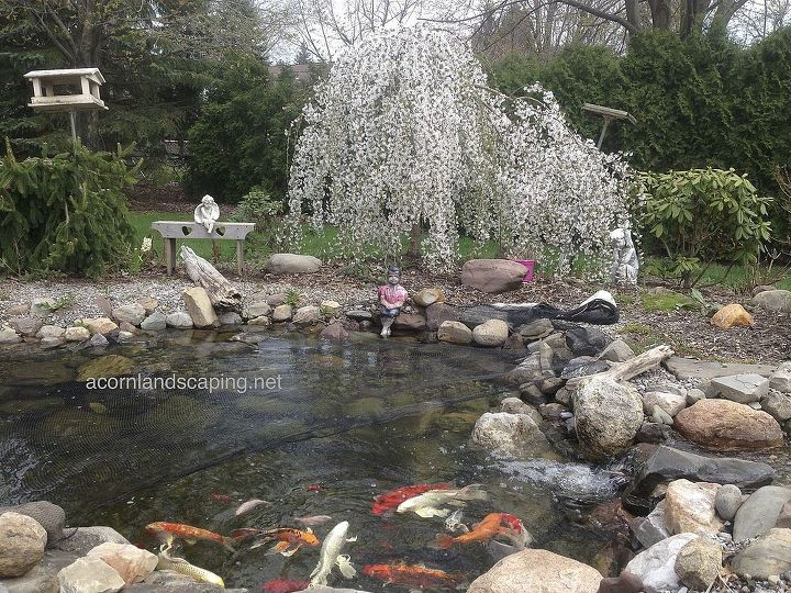 ecosystem pond maintenace spring pond or water garden maintenance tip, home maintenance repairs, outdoor living, ponds water features, Keep your pond looking good and your fish healthy with a regular pond clean out in the spring and a little routine maintenance through out the year