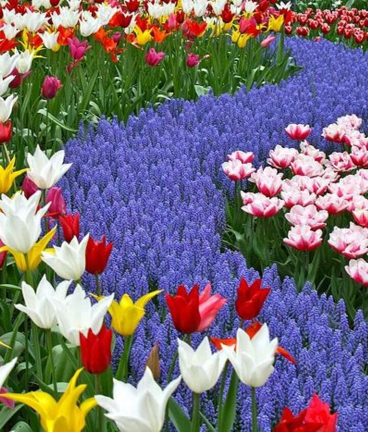 Keukenhof offers the visitor lots of different settings for gardens from full sun to woodland forest.