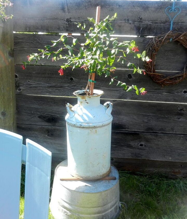 I planted honeysuckle in my old milk jug and for height placed it on top of an old galvanized wash tub. Hummingbirds love it.