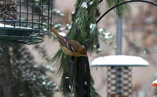 urban garden winterizing update part one, gardening, pets animals, seasonal holiday d cor, urban living, wreaths
