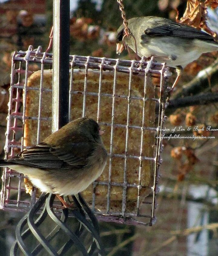 Suet provides a high energy food for the cold weather.