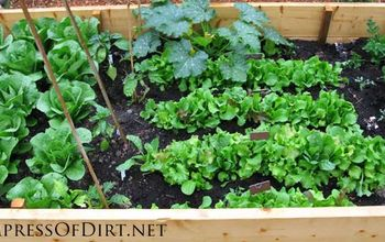 Top 10 vegetables you can grow in the shade