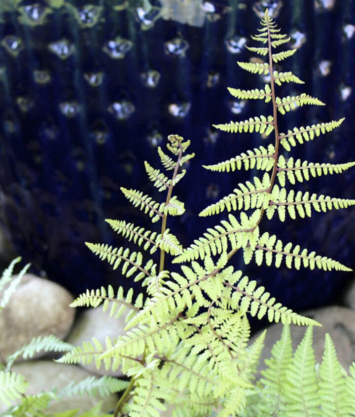 a water feature for a shade garden, gardening, ponds water features, Use river rock around the base and plant woodland plants such as this ghost fern to soften the edges