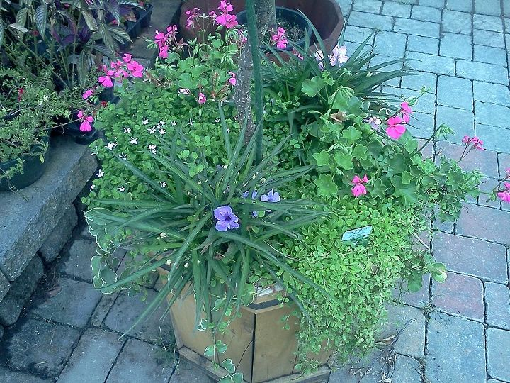 Mixed perennials and annuals together