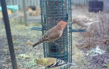 repurposed handy dandy bird seed scooper duper, gardening, repurposing upcycling, My friends like it