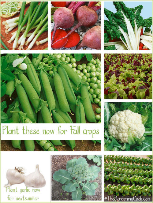 Gardening Cook - http://thegardeningcook.com/what-to-plant-for-fall-gardens/
