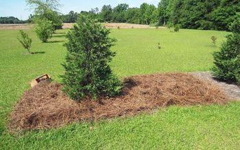 Pine Straw by the Truckload for Hibiscus House