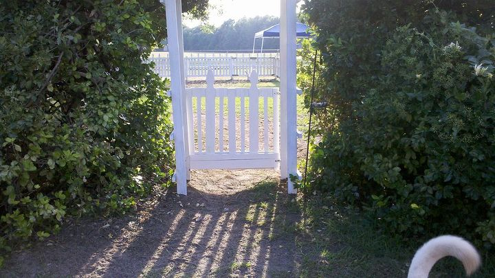 The garden gate was made from pallets too.  The arbor was made from my childrens' old sandbox.  We cut the large boards down to build the arbor.
