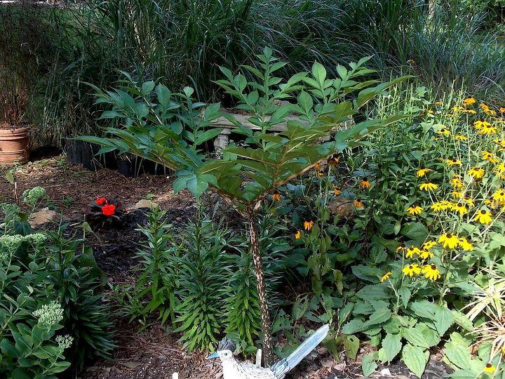 q lily identification please, gardening