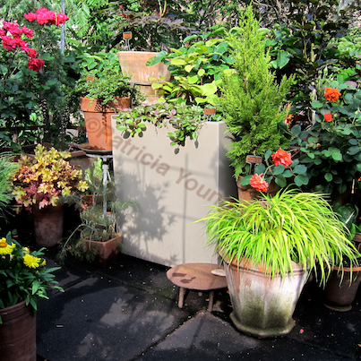 """This image featured in a """"story"""" on Blogger @ http://www.thelastleafgardener.com/2013/01/another-year-over-and-new-one-just_13.html"""