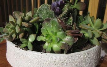 DIY Succulent Dish Gardening