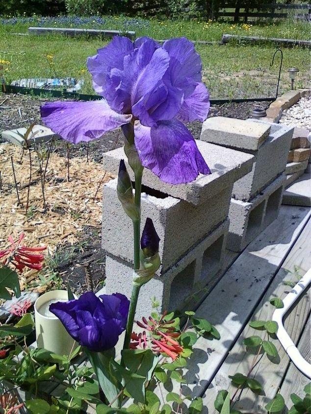 hydrangea, flowers, gardening, hydrangea