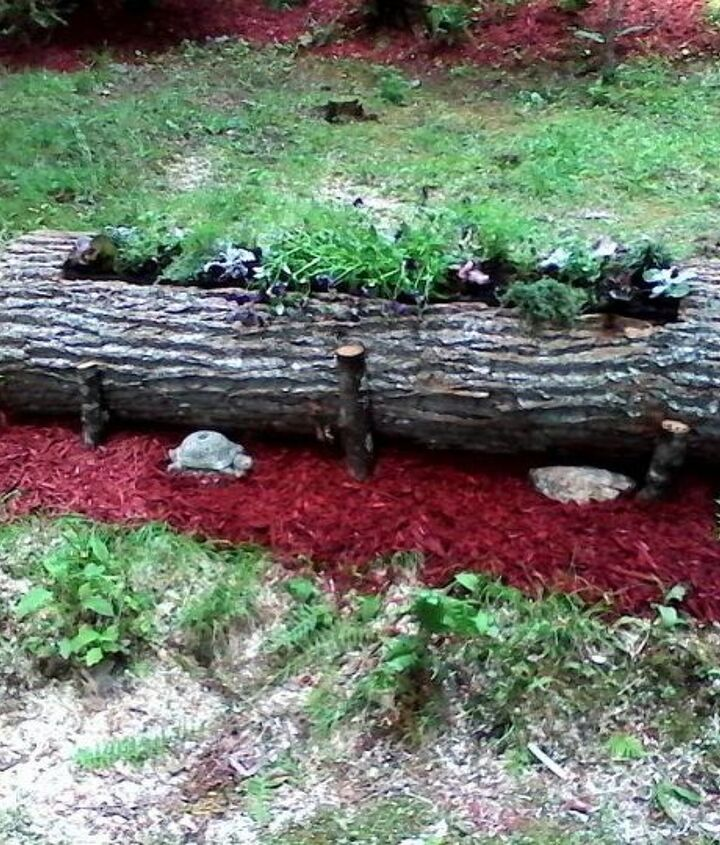 dead tree gets new life, gardening