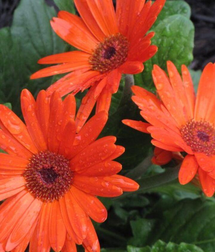 everything is blooming, flowers, gardening
