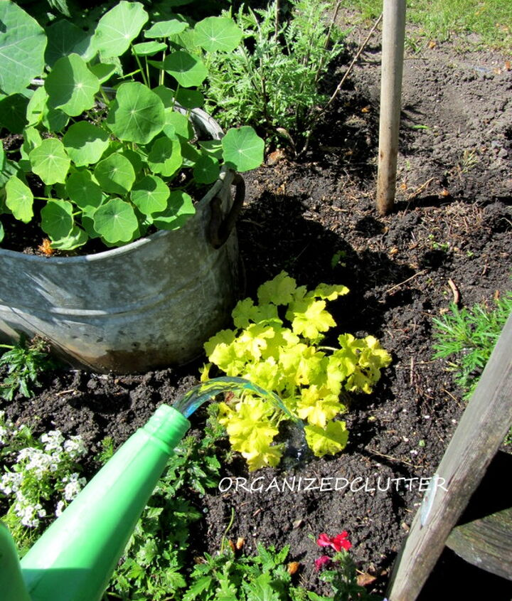 Mix one scoop full of fertilizer to two gallons of water.