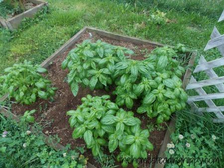 why raised garden beds, gardening, raised garden beds