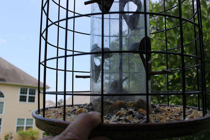 danger with bird feeders, outdoor living, pets animals
