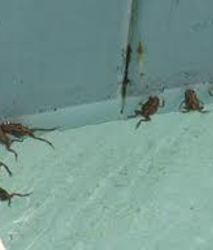 q how to get rid of frogs, pest control