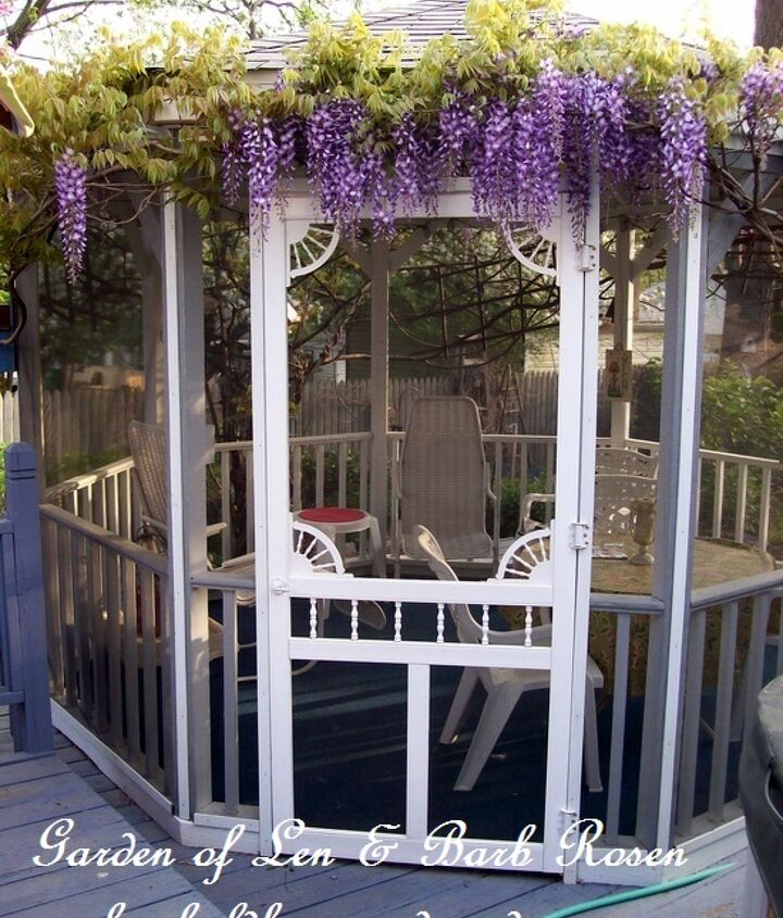 Spring blooming wisteria crowning the gazebo.