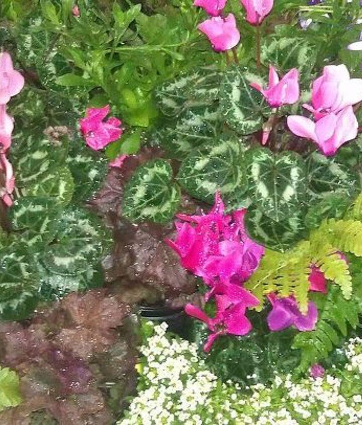 pics from 2013 southeastern flower show in atlanta, flowers, gardening