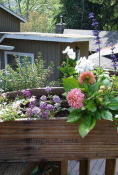 repurpose a vintage tool box into a planter, flowers, gardening, repurposing upcycling, My after shots are not the best in the bright light and it s really heavy now so hard to move to a better location lol