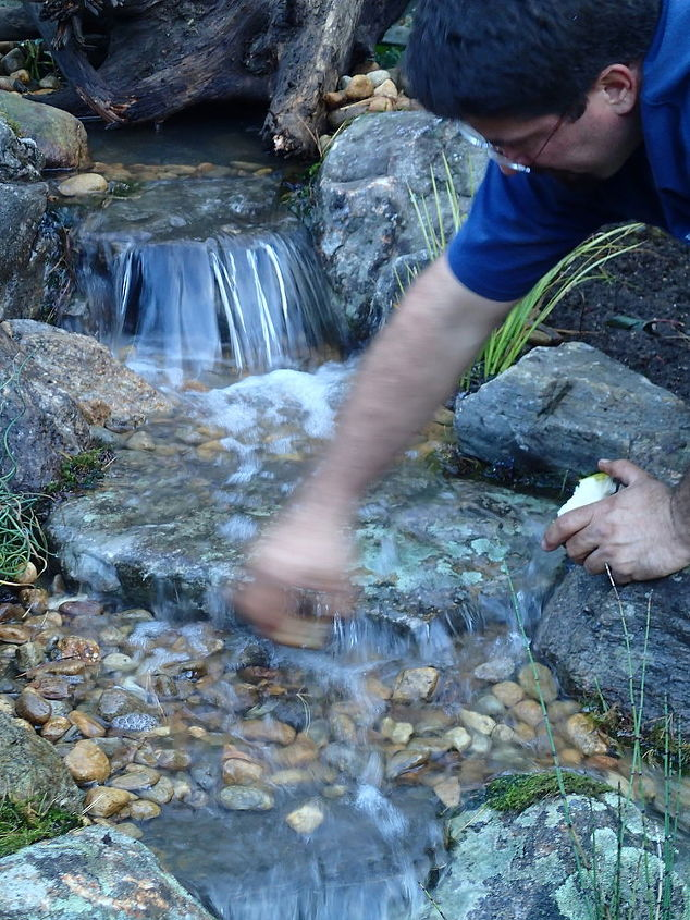 pond makeover in ma, outdoor living, ponds water features