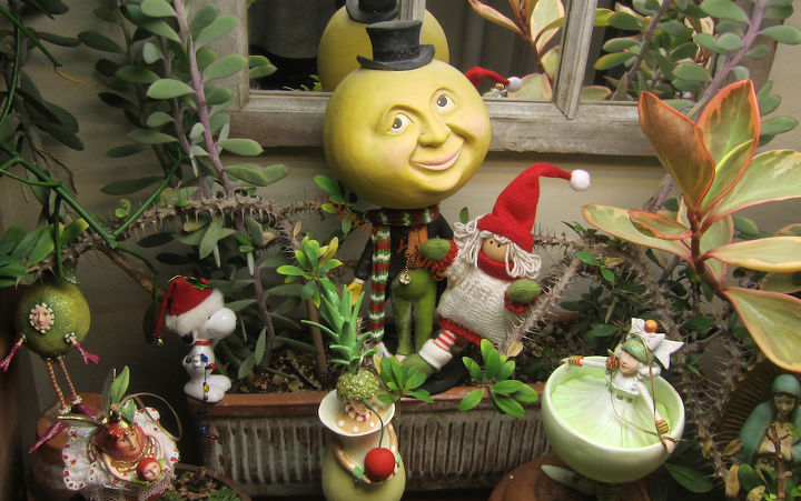 celebrating boxing day or the 2nd day of christmas in the garden, flowers, gardening, seasonal holiday d cor, succulents