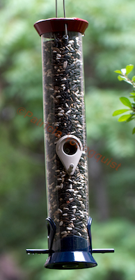 Food from the Droll tube feeder was  ULTIMATELY enjoyed by many a bird as evidenced from the photo-ops @  http://pinterest.com/thellgardener/my-birds-their-feeders/