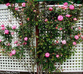 Expert Advice For Building A Lattice Trellis In Your Garden, Diy, Gardening,  How