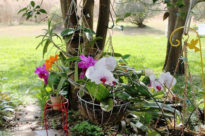 orchids in january, flowers, gardening, Plants live here unless weather is below 50