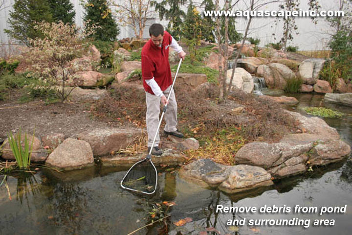If you shut your pond down for winter, remove leaves and debris - make sure to get down to the bottom of the pond.