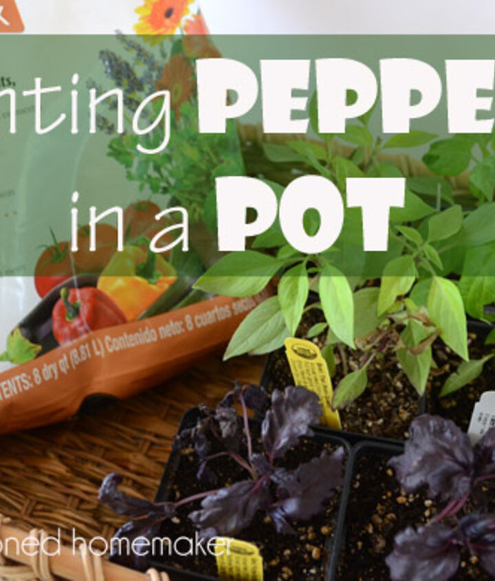 Grow easy things in a pot near your back door.  Here, I've planted a mild jalapeno pepper and surrounded it with basil varieties.