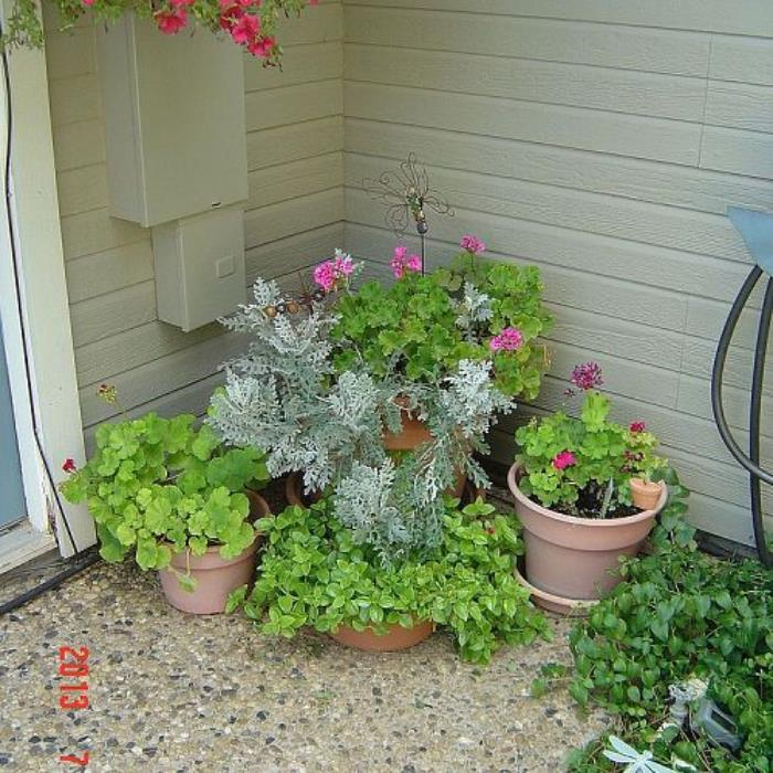 Hot pink geraniums, red dew, trailing red petunias.