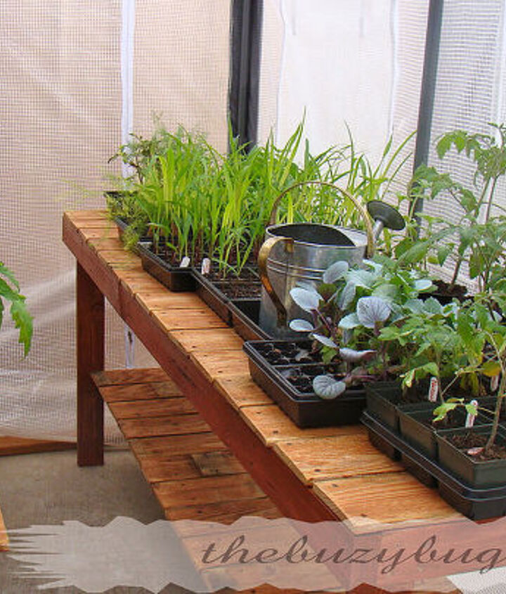Greenhouse bench with baby plants.