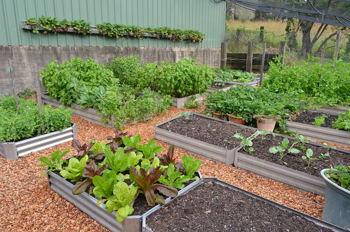 planting strawberries in old gutters, gardening, repurposing upcycling