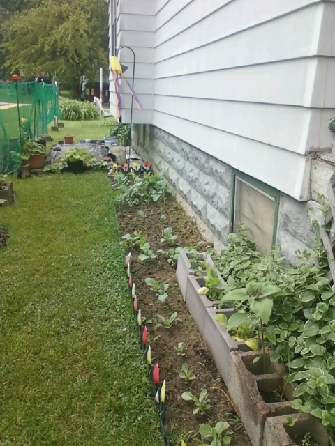 Garden is filling in nice