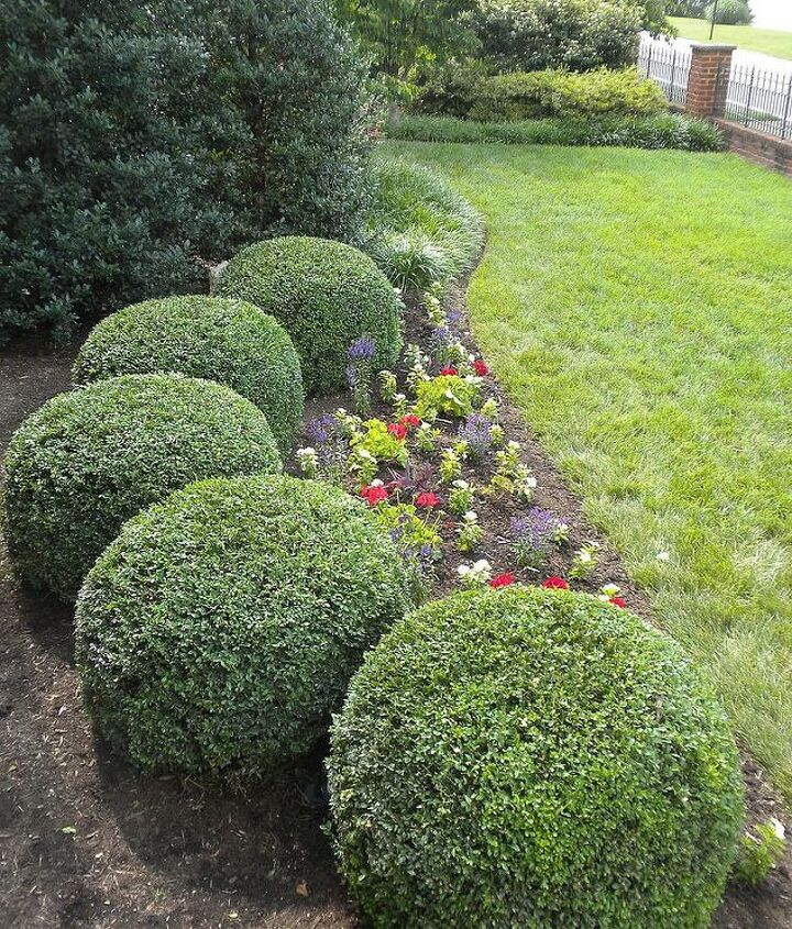 Front boxwoods, annuals