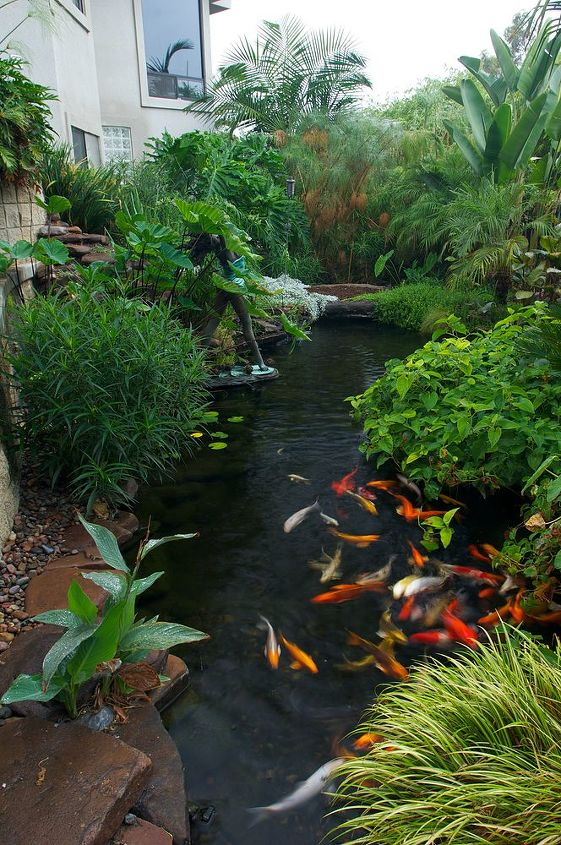 Hard to create a paradise in your yard without koi