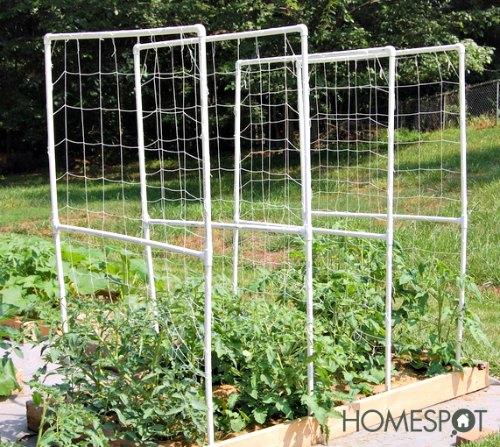 Easy PVC Tomato Trellis | Hometalk