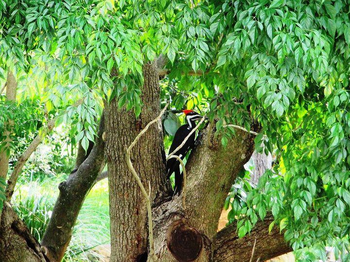 wildlife woody woodpecker, wildlife animals