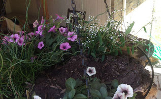 kids mothers day gardening project a proven winner, container gardening, flowers, gardening, Hanging Basket