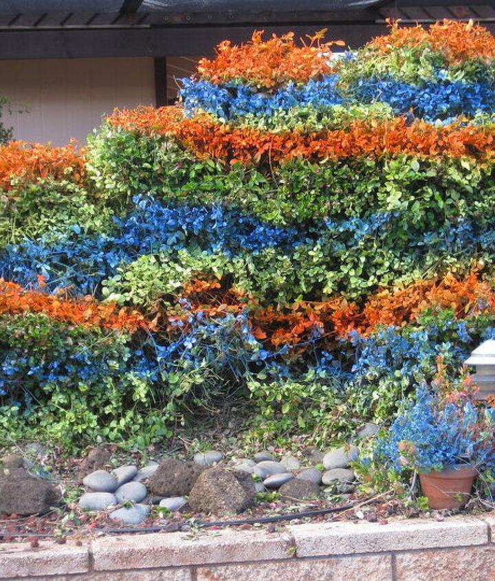 The hedge boders the Fiber Optic Lite waterfall!!!