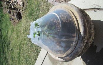 greenhouse cone, gardening