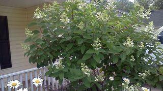 front flower bed need ideas please, flowers, gardening, landscape