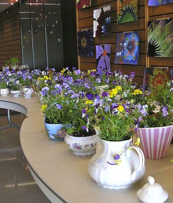 Tea cup plant sale