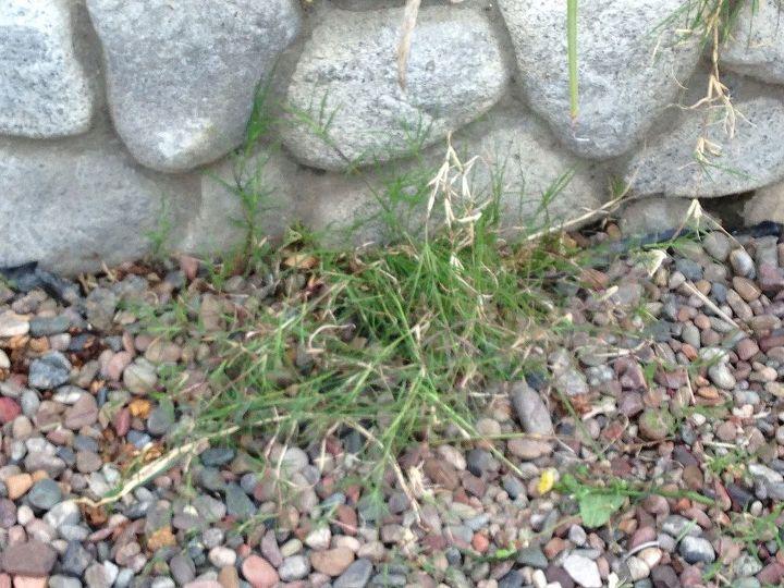q help how do i kill tiff bermuda permanently, gardening, landscape