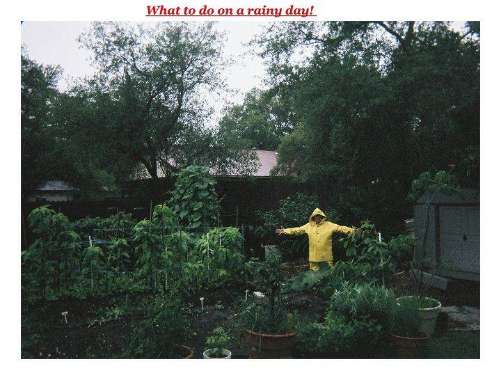 Gardening in the rain.