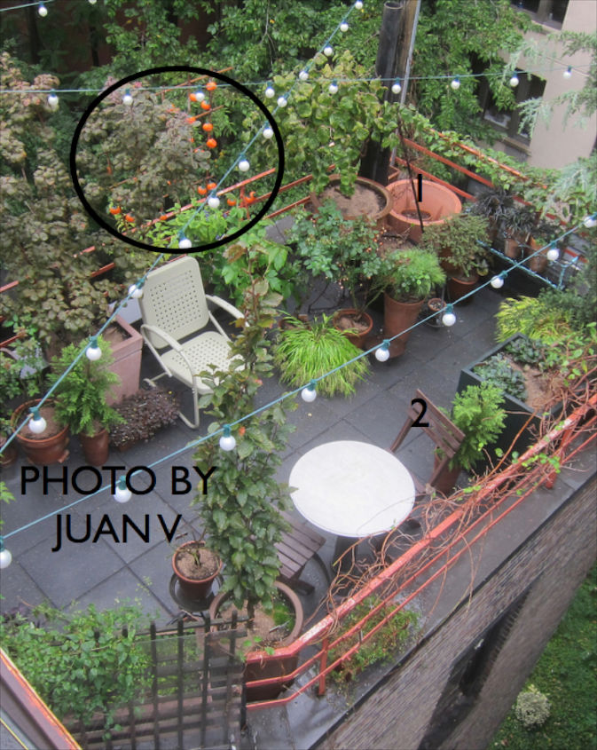 Halloween 2012. View 1. The black circle indicates pumpkin lights strung along my urban hedge which is a bamboo trellis as discussed on HT @ http://bit.ly/1bsi4vc