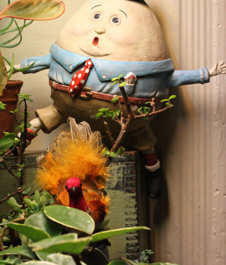 Ruffled Feathers seen here with Humpty Dumpty, a permanent resident in my succulent garden @ http://www.pinterest.com/pin/176625616609733053/